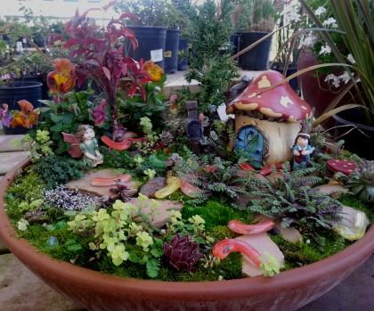 Cherokee Sunset Rudbeckia Echeveria Fairy Garden