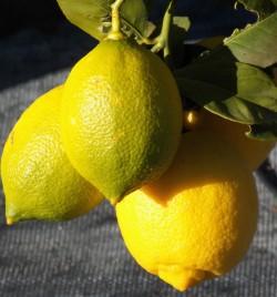 Genoa Lemon