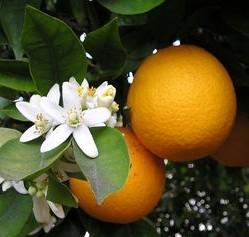 Trovita Orange