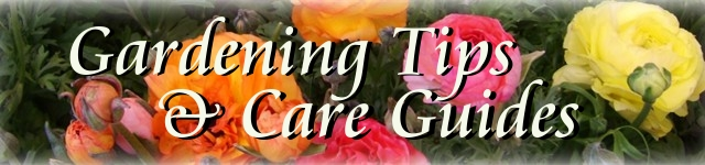 Garden Tips and Care Guides